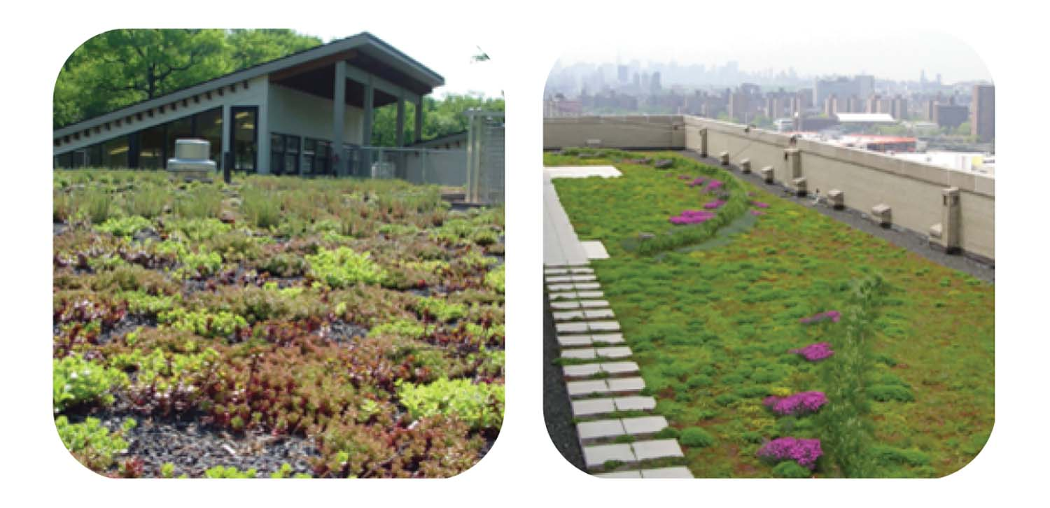 vegetated roofing 9.jpg
