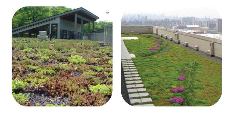vegetated roofing 9.jpg